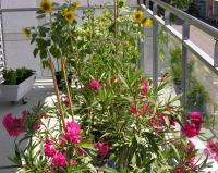 Tägerhardstrasse Blumen 047
