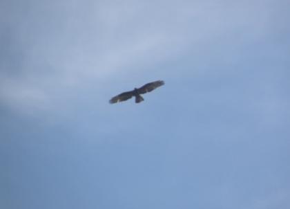 Vevey 15.05.2009 051