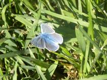 Vevey 15.05.2009 072