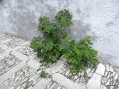 Sizilien 2009 057