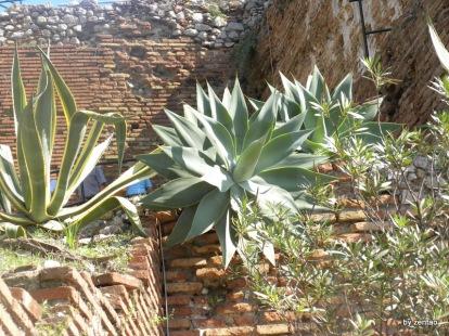 Sizilien 2009 086