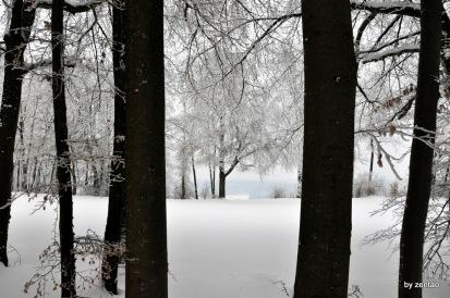 Blick durch die Bäume auf einen Baum