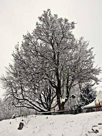 doppel Baum
