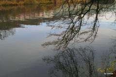 Äste eines Baumes spiegeln sich im Wasser