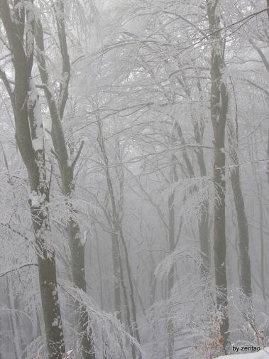 Winter-Nebel