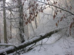 alte Bäume auf dem Weg