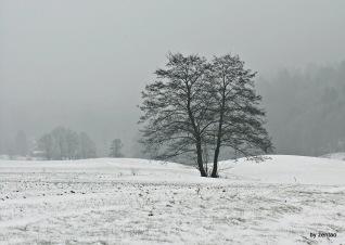 Winterbaum im Morgennebel