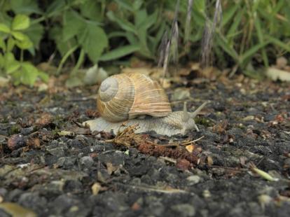 Natur Wettingen 2009 021