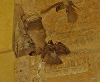 Vogelnest im Luxor Tempel