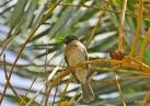 ein mir unbekannter Vogel