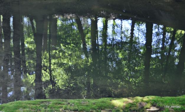Spiegelung in einem Waldteich