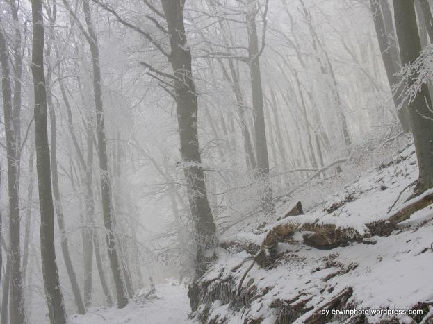 Natur 2009 Burghorn 024