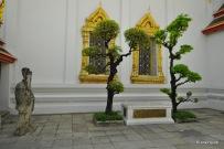 Konfuzius mit zwei Araukarien