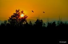 Vögel fliegen vorbei