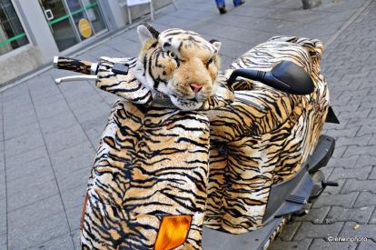 rollender Tiger