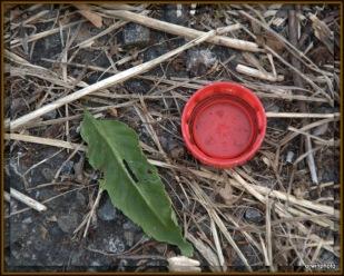 Platikdeckel in der Natur?