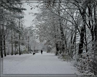 Winter...Schnee...Weg...