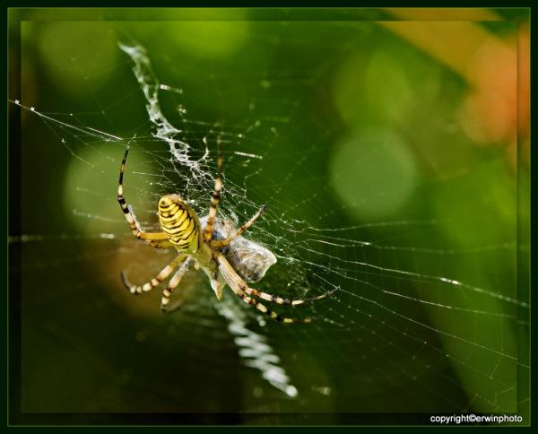und in der Mitte des Netzes lauert eine Spinne