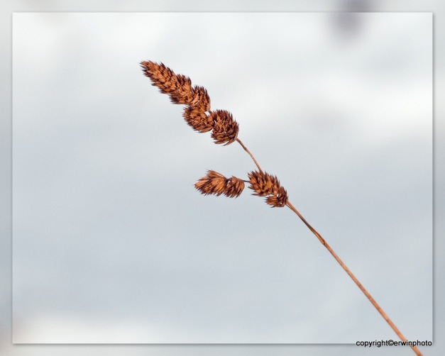 vergängliches Seegras