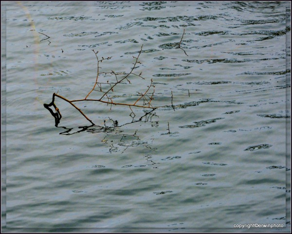 treibender Ast im Wasser
