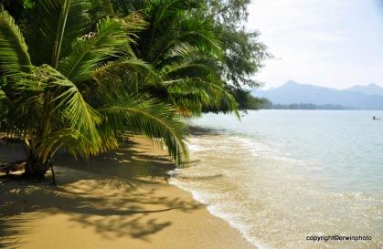 entspannen unter Palmen