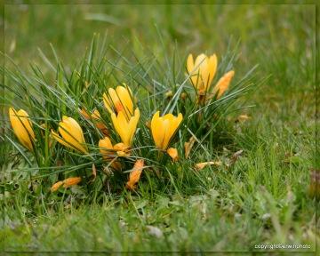 zaghaft zeigt sich der Frühling...