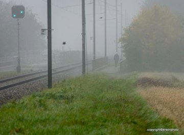 Morgenlauf im Nebel