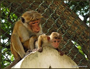 Affenmutter und Baby