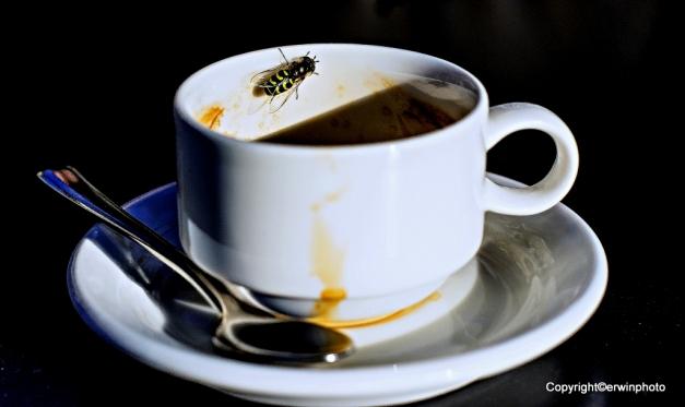 auch Insekten lieben Kaffee