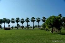 Palmen Allee