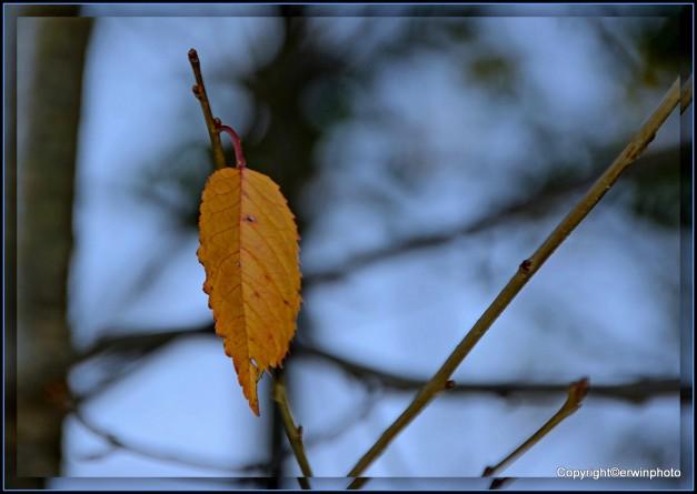1-Herbst-Tägerhardwald 30.10