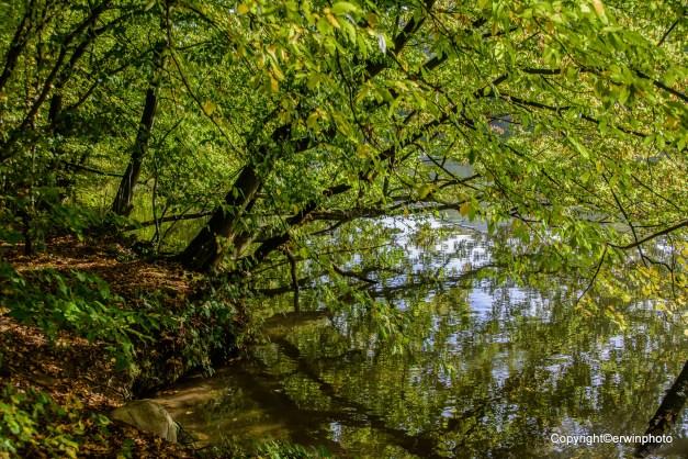 die Ruhe des Waldteiches
