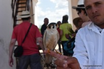 für einen CUC dufte ich den Falken fotografieren