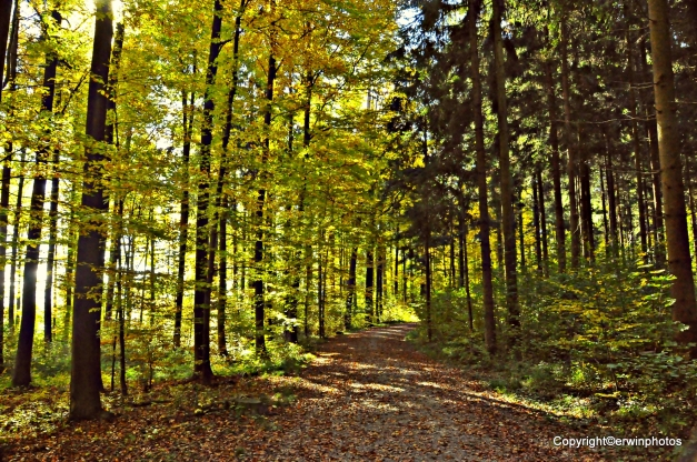 Tägerhardwald
