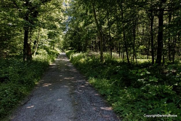 Tägerhardwald im Sommer