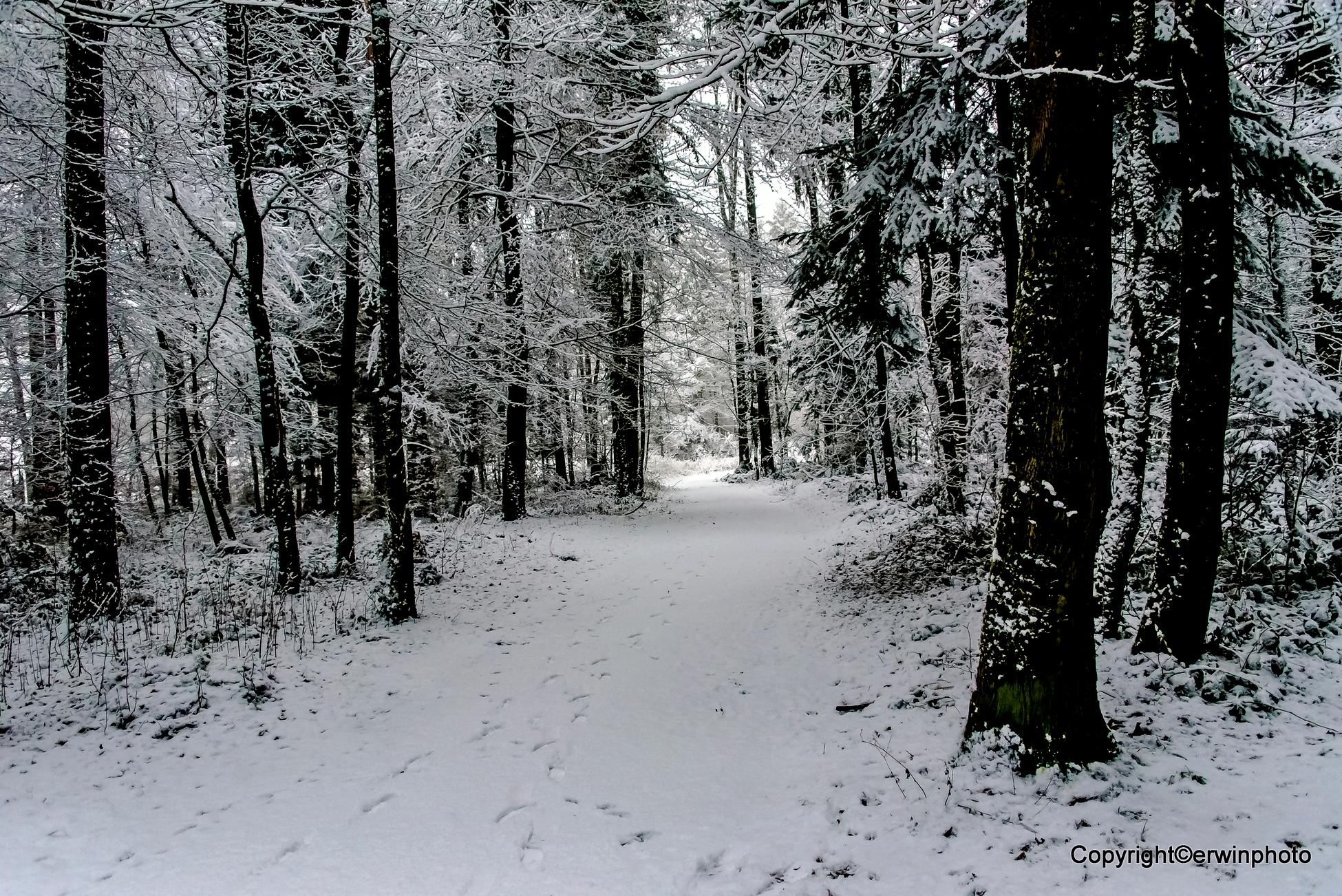 Tägerhardwald 2017