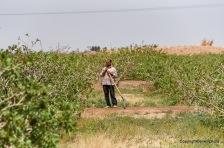 Iranischer Bauer