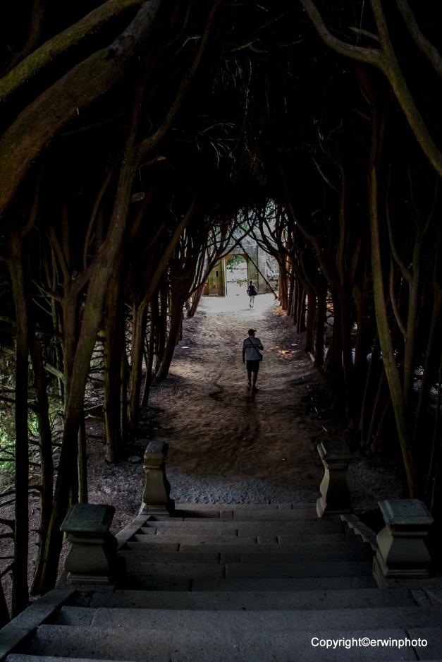 im Wurzelwerk eines Baumes