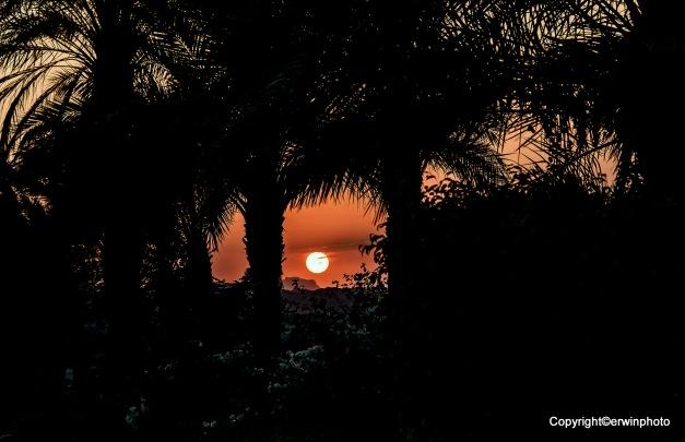 die Sonne geht zwischen den Palmen in der Wüste unter