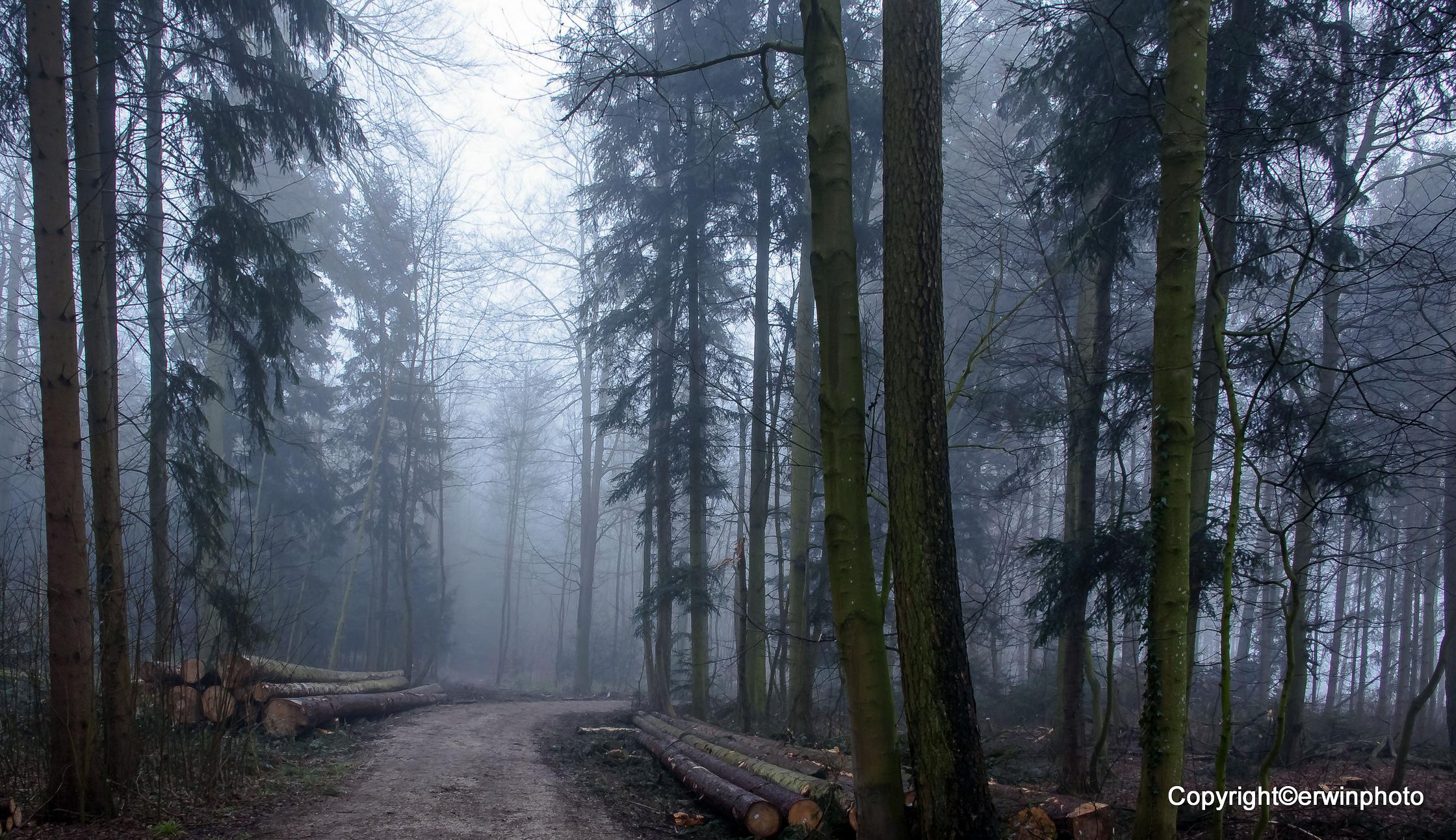 Nasskalt und Nebel