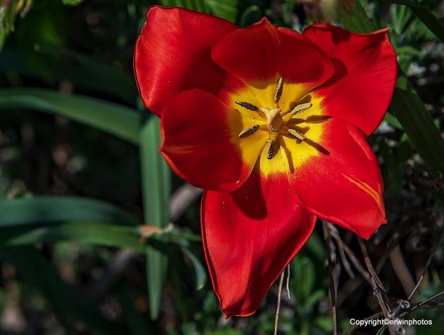 blühen und verwelken, liegen in der Natur der Dinge