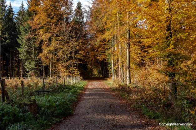 der Weg in den Herbstwald