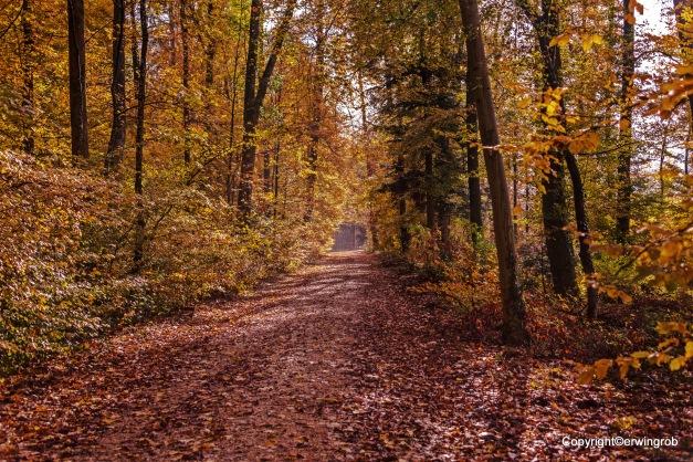 der Herbstwald am Morgen