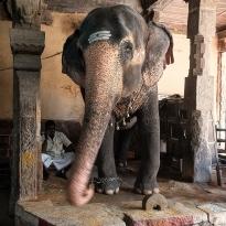 und wieder ein Vertreter von Ganesha