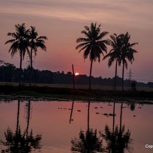 die Sonne geht in den Backwaters unter...