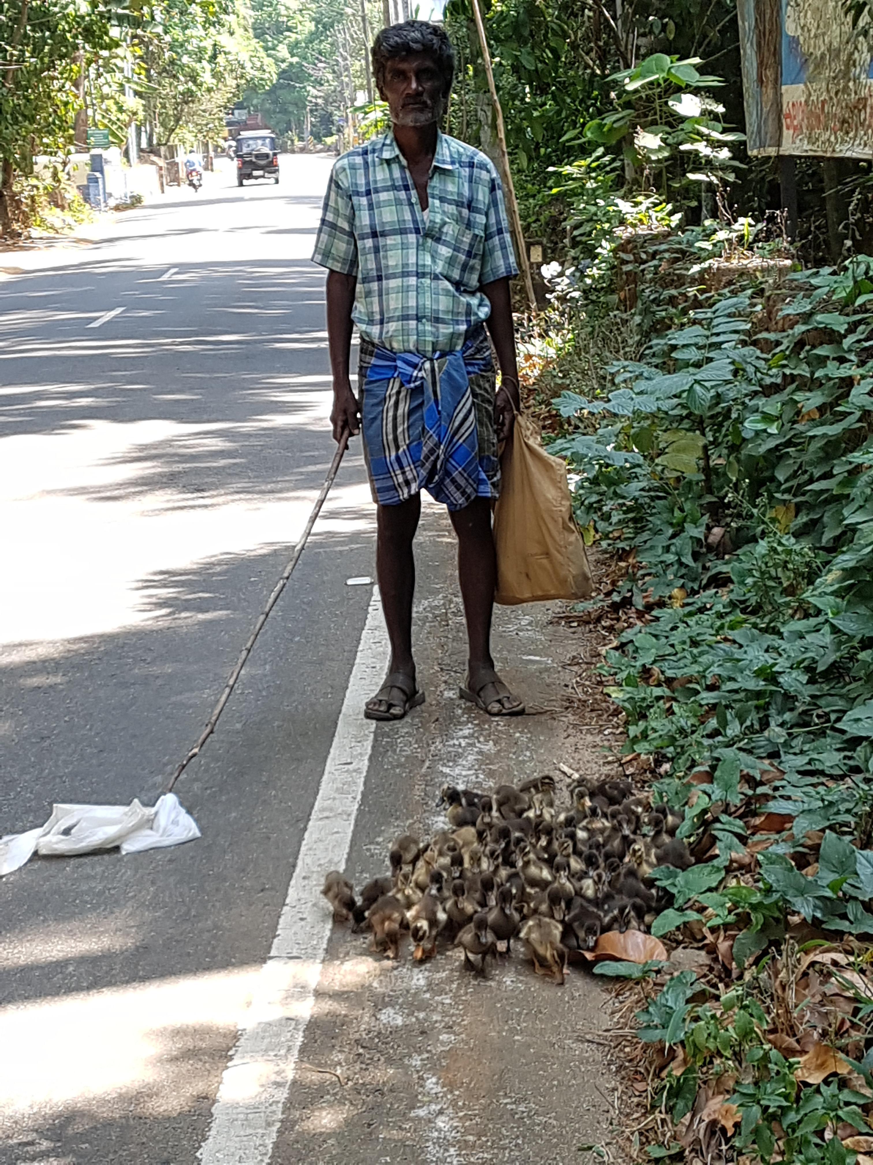Gänse Hirt in Marangattupilly Süd Indien
