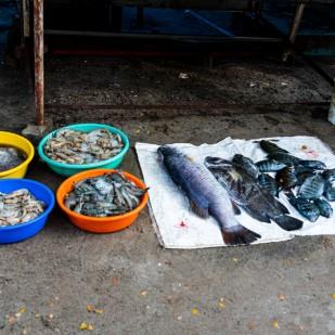 Fisch Verkauf
