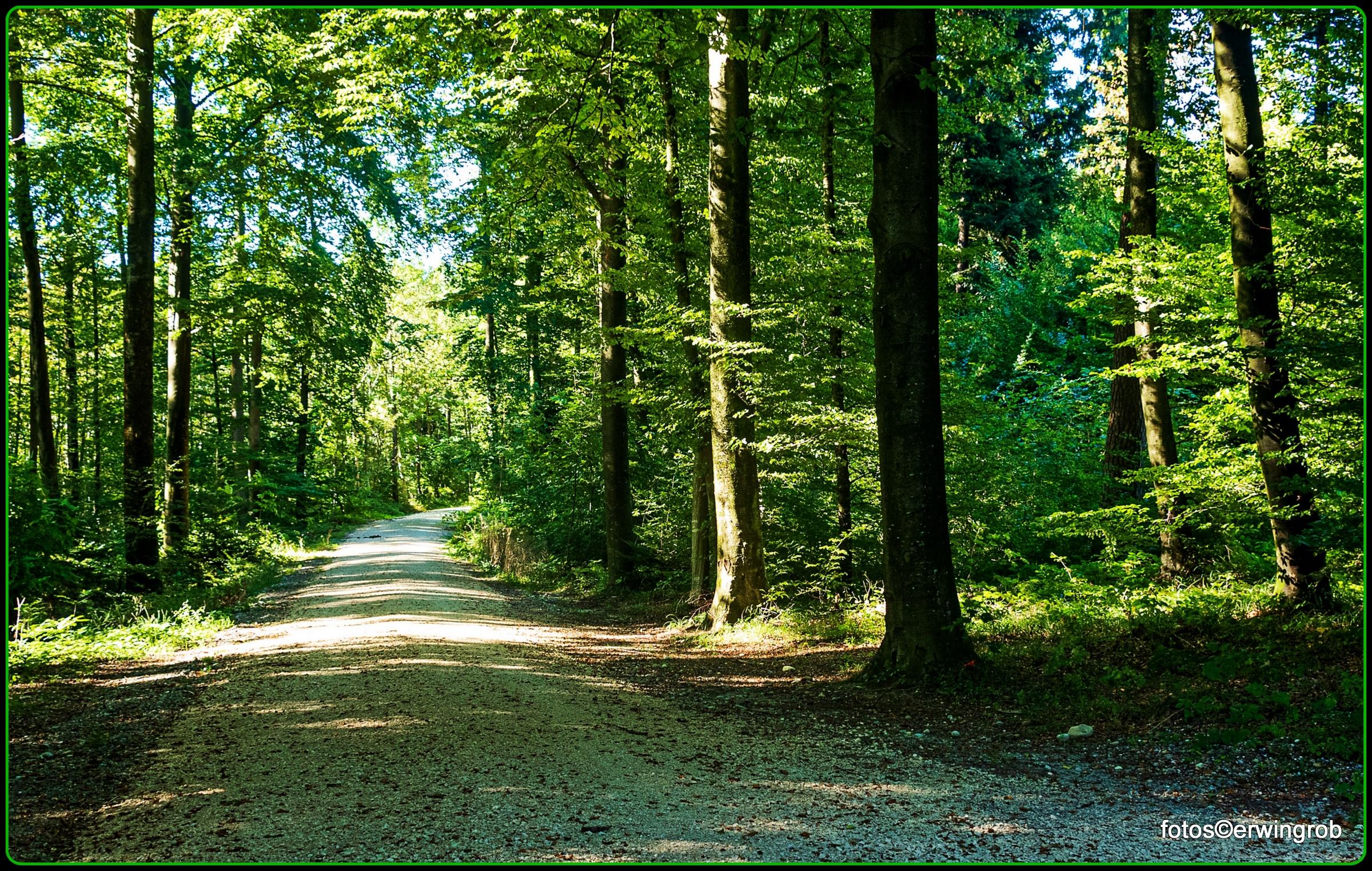 der Tägerhardwald