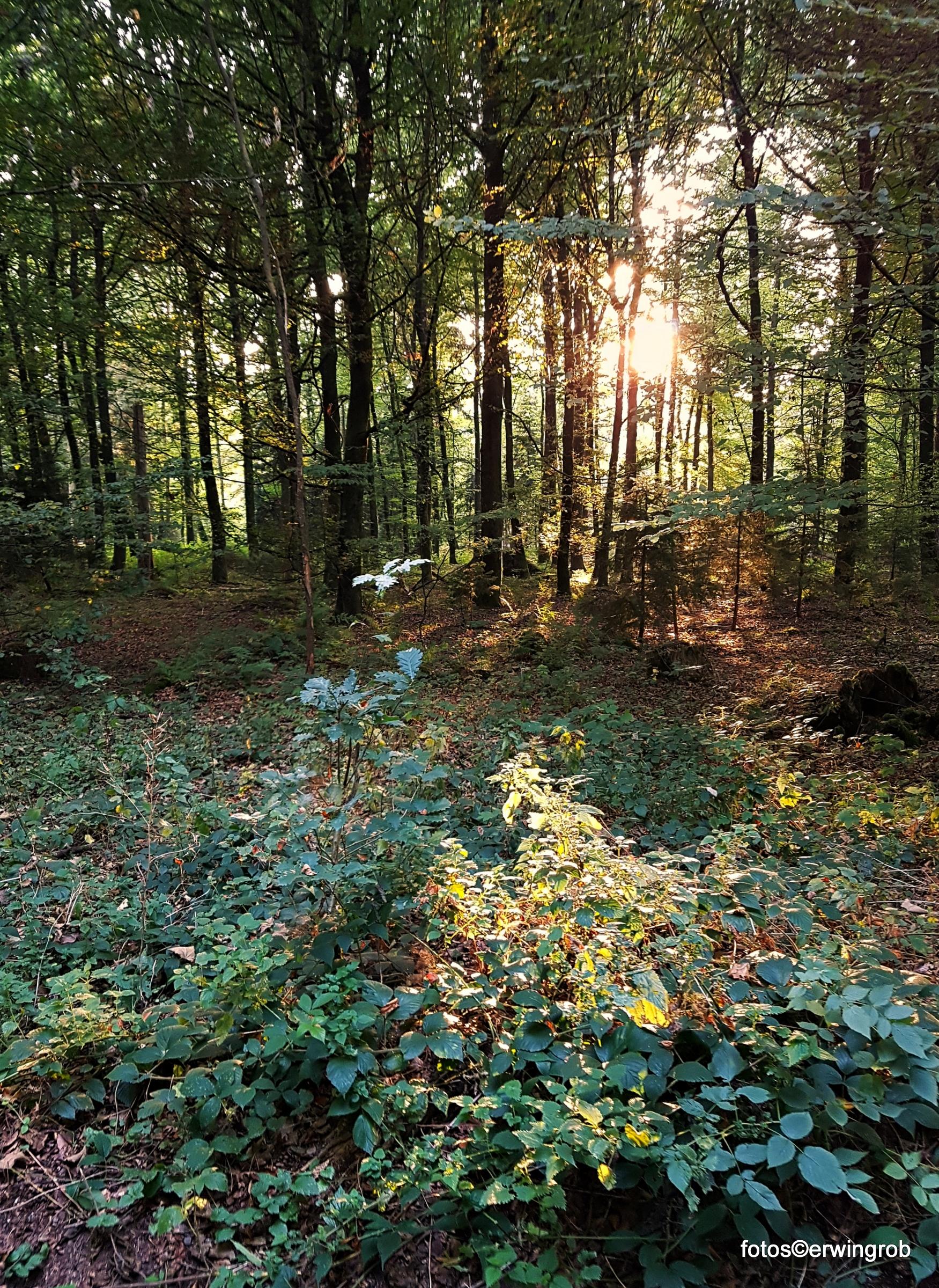 Sonne am Abend scheint durch die Bäume