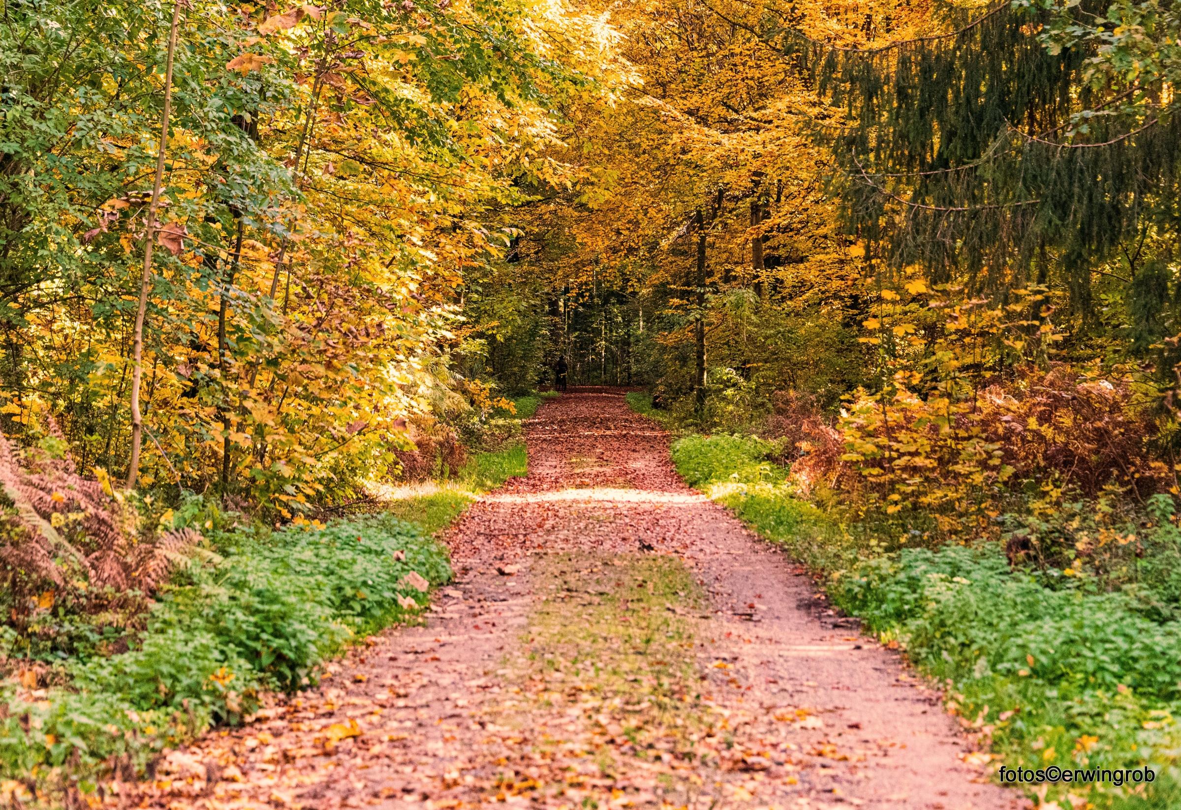 Herbstwald zu Corona Zeiten